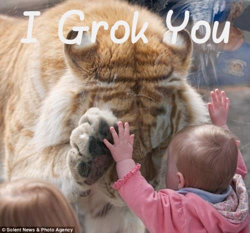 i grok you